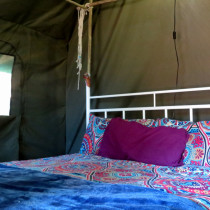 caracal_inside_the_tent