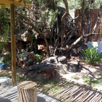 caracal_patio_and_braai_area